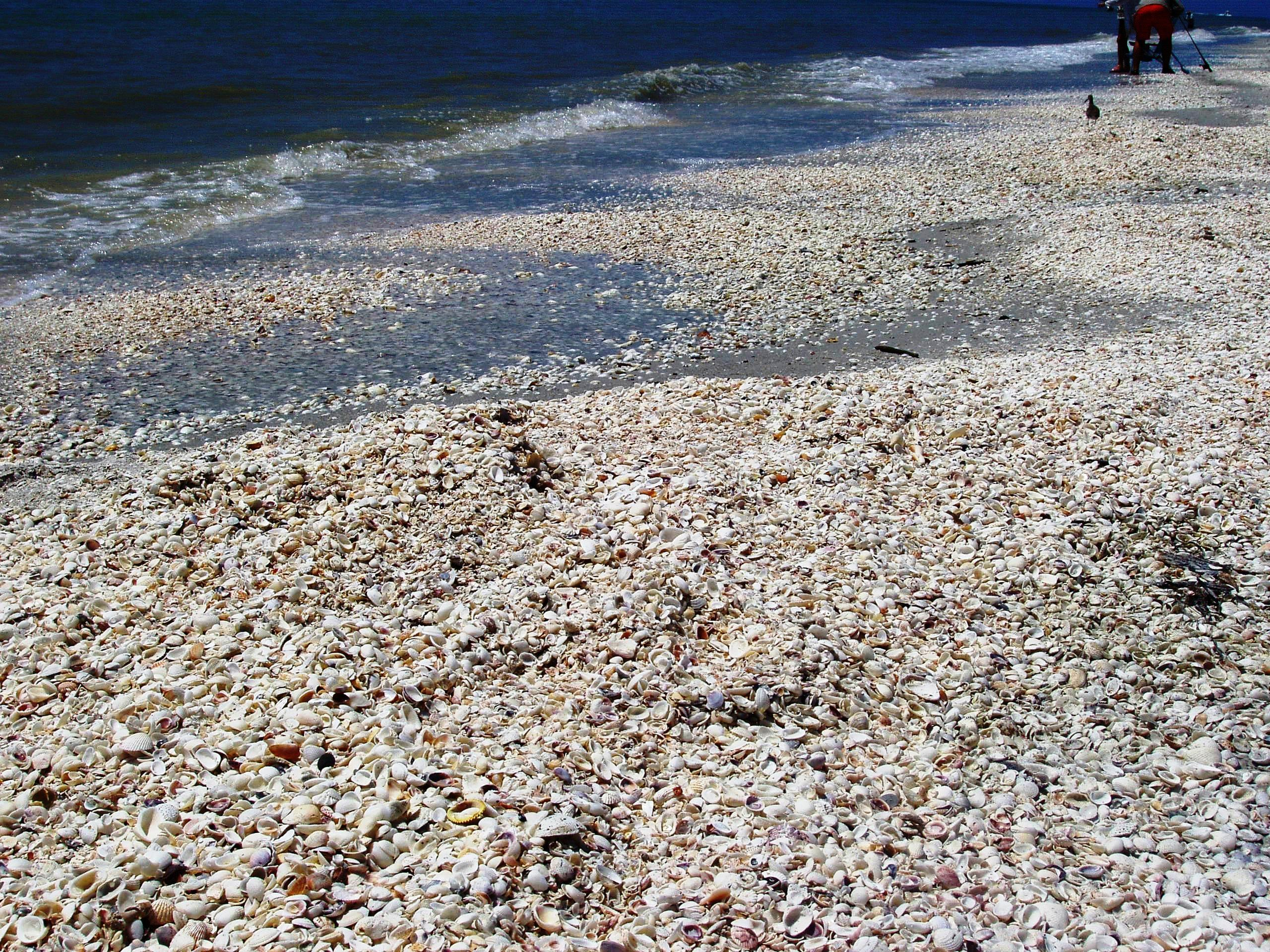 Sometimes Gulf Currents Produce Large Collections of Seashells
