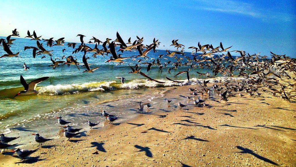 A Tropical Bird Paradise